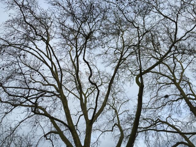 bäume hubertusplatz Aachen