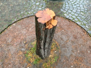 In Dom-Nähe gefällter Rotdornbaum.