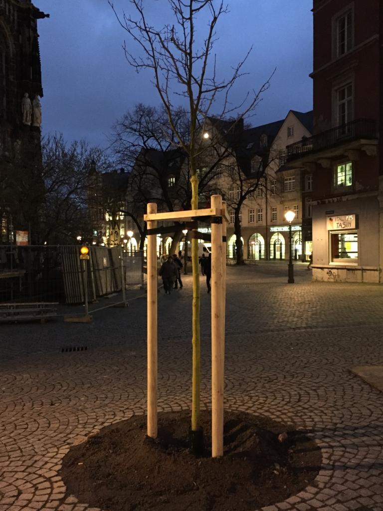 bäume, Aachen, Rotdorn
