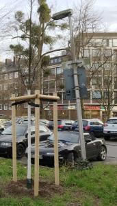 Nicht immer ist klar, warum ein alter Baum weichen musste und ein neues Bäumchen gepflanzt wurde. Hier: Seilgraben/Annastraße.