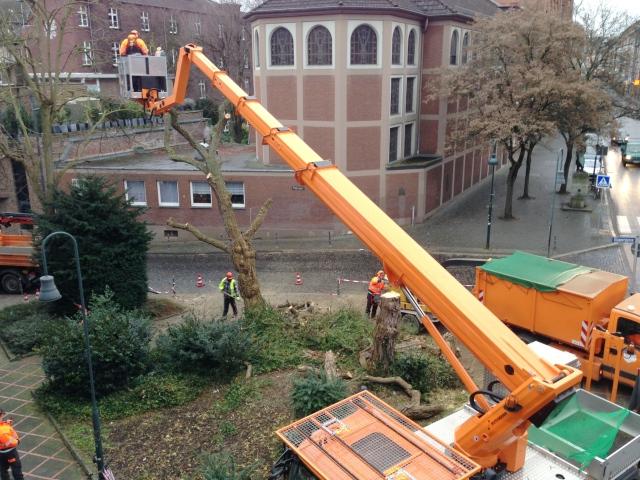 """Im Januar vorigenJahres wurden völlig überraschend zwei dicke alte Bäume in der Jakobstraße gefällt. Gerade jetzt im Frühling werden sie sehr vermisst. Da hilft auch kein """"Tag der Baumpflege"""" mehr."""