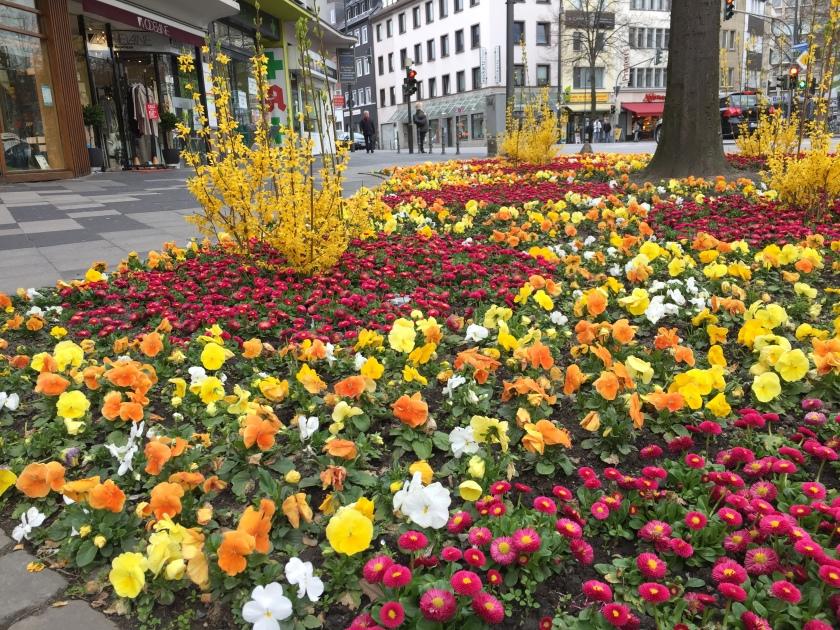 Auch schön: Farbenpracht vor dem Lust for Life - Kaufhaus, das in einem Jahr an der Komphausbadstraße seine Pforten schließt.