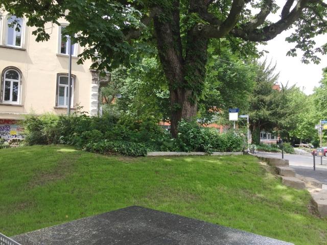 Schöne alte Bäume hat der neue Park natürlich auch.