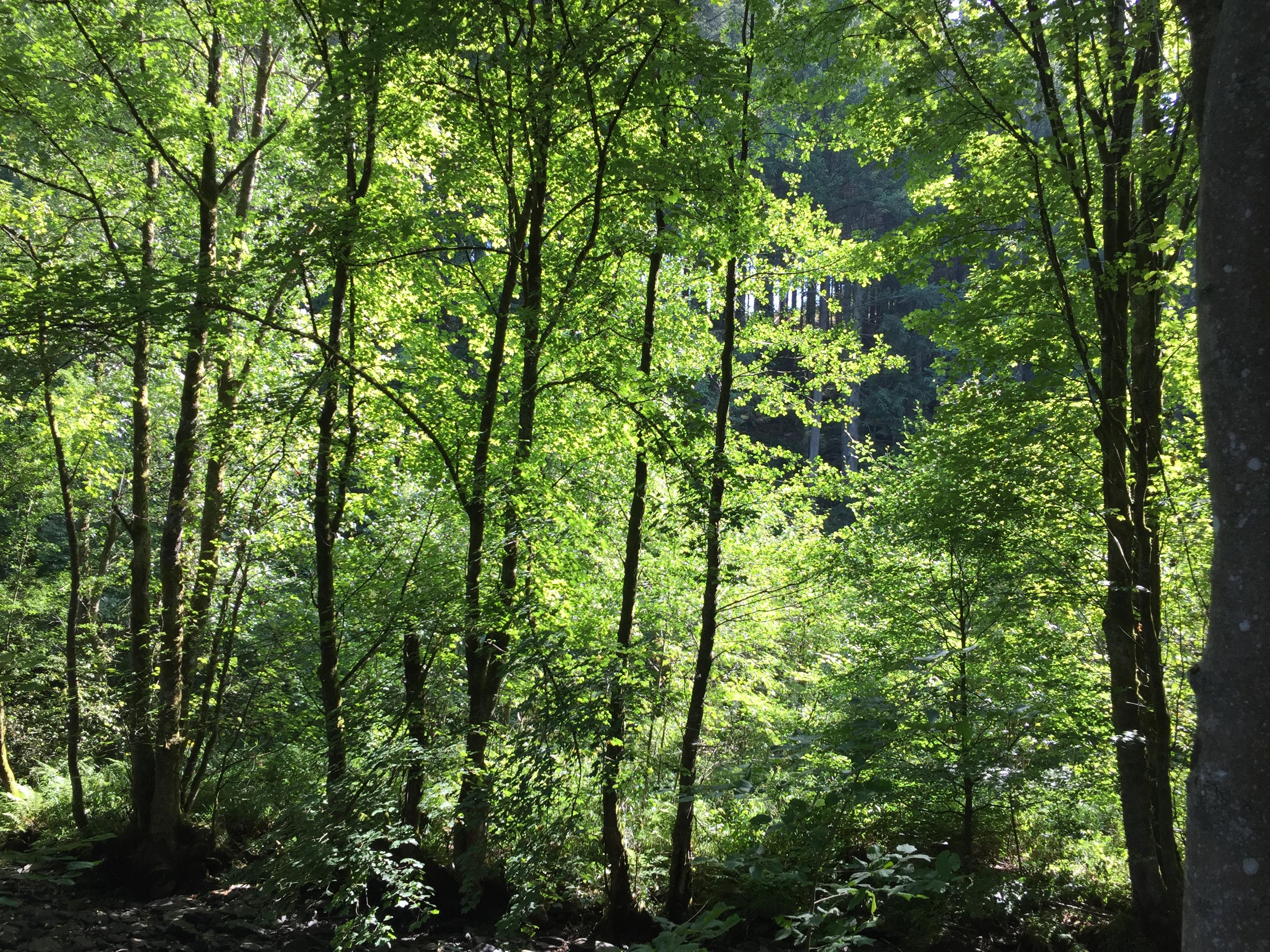 Bei zu viel Sonne helfen Bäume